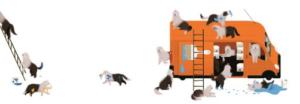 honden-in-de-auto-2-jpg